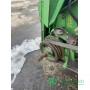 Комбайн зернозбиральний  John Deere 9650 STS (2002)